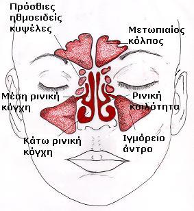 Φυσιολογικοί Παραρρίνιοι κόλποι Δρ Δημήτριος Ν. Γκέλης, Ωτορινολαρυγγολόγος